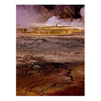 THERMAL POOL WITH DRY TREES AND GOLD TERRACES POSTCARD