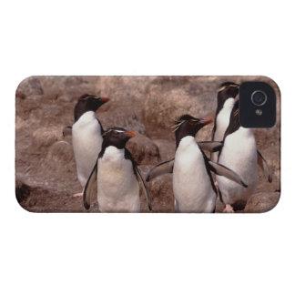 These five Rockhopper Penguins (Eudyptes iPhone 4 Case
