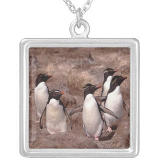 These five Rockhopper Penguins (Eudyptes Square Pendant Necklace