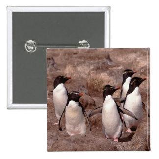 These five Rockhopper Penguins (Eudyptes Pinback Button