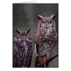 These Great Horned Owls (Bubo virginianus), Card