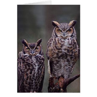 These Great Horned Owls (Bubo virginianus), Cards