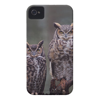These Great Horned Owls (Bubo virginianus), Case-Mate iPhone 4 Cases