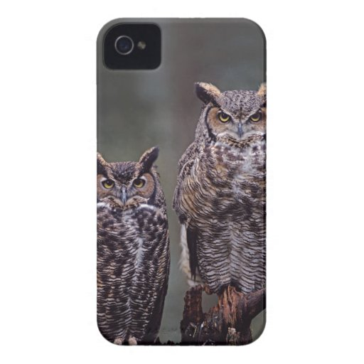 These Great Horned Owls (Bubo virginianus), Blackberry Bold Cases