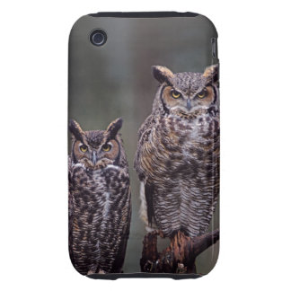 These Great Horned Owls (Bubo virginianus), Tough iPhone 3 Cases