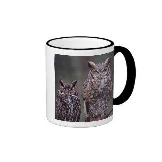 These Great Horned Owls (Bubo virginianus), Mug