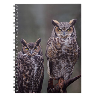 These Great Horned Owls (Bubo virginianus), Notebook