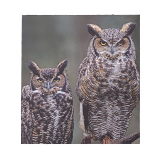These Great Horned Owls (Bubo virginianus), Notepad