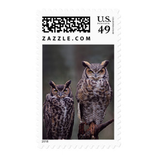 These Great Horned Owls (Bubo virginianus), Postage Stamps