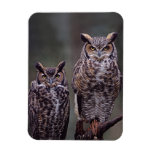 These Great Horned Owls (Bubo virginianus), Flexible Magnet