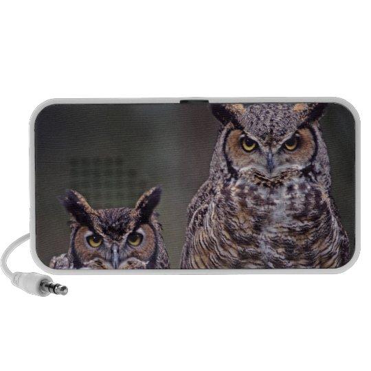 These Great Horned Owls (Bubo virginianus), Speaker