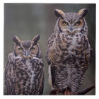These Great Horned Owls (Bubo virginianus), Tile