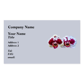 These maroon and white Phalaenopsis orchids with t Business Card