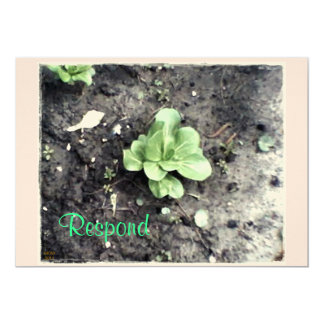 These Quiet Seasons April Bok Choy Card