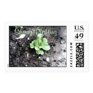 These Quiet Seasons April Bok Choy Postage Stamp