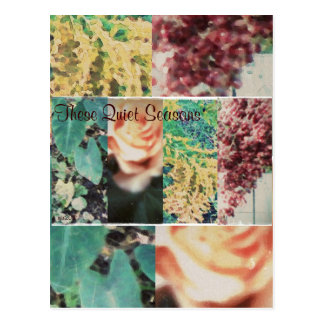 These Quiet Seasons Four Seasons Postcard