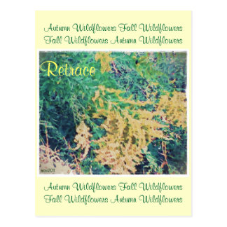 These Quiet Seasons September Wildflowers Post Card
