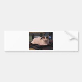 Thessie Bumper Sticker