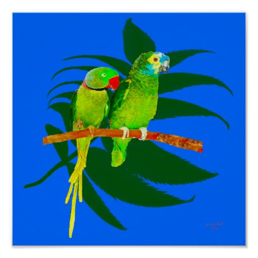 TheTwo Parrots Posters