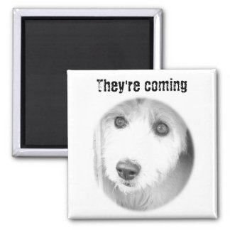 They're coming 2 inch square magnet