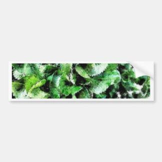 Thick green cabbage leaves bumper sticker