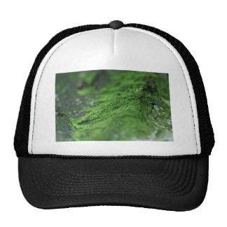 thick green foam cap