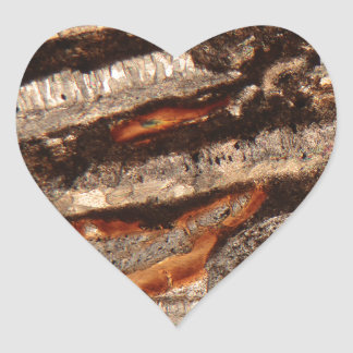 Thin section of fossil calcareous shell fragments heart sticker