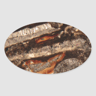 Thin section of fossil calcareous shell fragments oval sticker