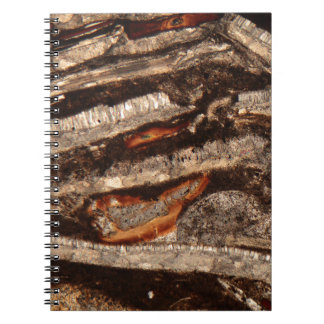 Thin section of fossil calcareous shell fragments spiral notebook