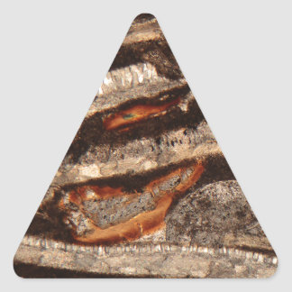 Thin section of fossil calcareous shell fragments triangle sticker