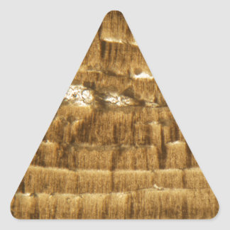 Thin section of Nummulite limestone under the micr Triangle Sticker