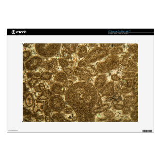 Thin section of Paleozoic limestone under the micr Decals For Laptops