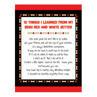 Things I Learned From Irish Red and White Setter Postcard