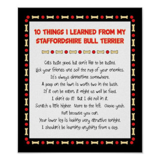 Things I Learned From Staffordshire Bull Terrier Poster