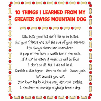 Things Learned From My Greater Swiss Mountain Dog Photo Cut Outs