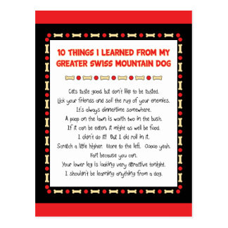 Things Learned From My Greater Swiss Mountain Dog Post Cards