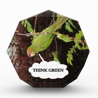 Think Green conure Award