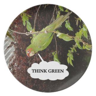 Think Green conure Melamine Plate