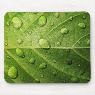 Think Green - Droplets on Leaf Mouse Pad
