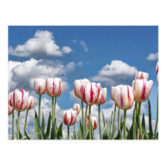 Think Spring! Postcard