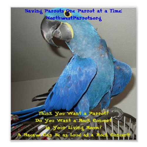 Think You Want a Parrot? NorthwestParrots.org print