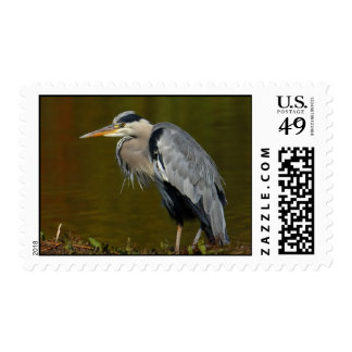 Thinking Heron Postage