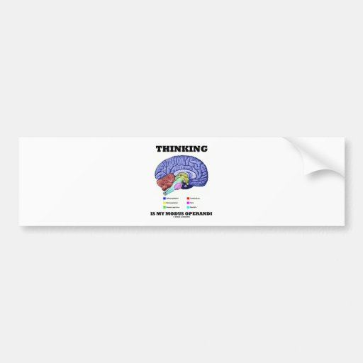 Thinking Is My Modus Operandi (Brain Anatomy) Bumper Stickers