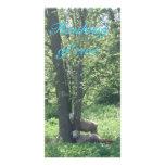 Thinking of ewe note card photo greeting card