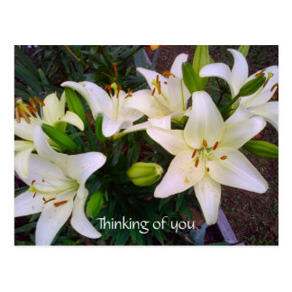 """Thinking of you"" Beautiful White Lily Postcard"