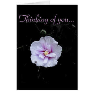 Thinking of you.../ Blank Card
