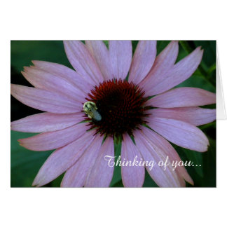 """Thinking of You"" Blank Notecard_ Coneflower Card"