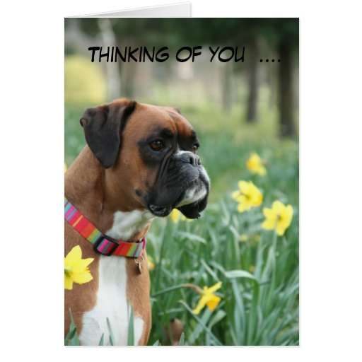 Thinking of you boxer dog greetings card