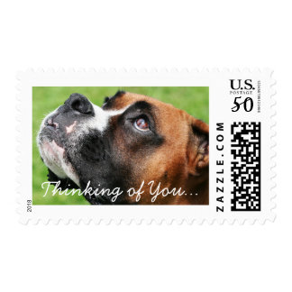 Thinking of You Boxer - Vindy Postage