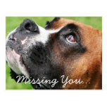 Thinking of You Boxer - Vindy Postcard